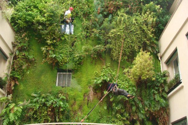 Koala elagage arbre paris 91 92 78 - Mur vegetal exterieur sans entretien ...